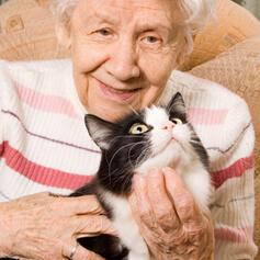 Best Cats for Senior Citizens