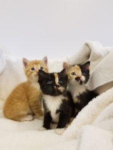 Drain Pipe Kittens